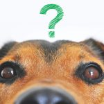 coronavirus-hond